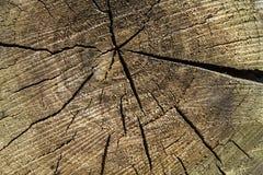 Ραγισμένο μέσο τμήμα του ξύλου Στοκ εικόνες με δικαίωμα ελεύθερης χρήσης