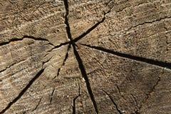 Ραγισμένο μέσο τμήμα του ξύλου Στοκ εικόνα με δικαίωμα ελεύθερης χρήσης