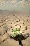 ραγισμένο μικρό χώμα φυτών Στοκ φωτογραφίες με δικαίωμα ελεύθερης χρήσης