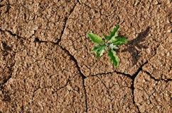 Ραγισμένο ξηρασία χώμα με το φυτό που αναπτύσσει κατευθείαν Στοκ Φωτογραφία