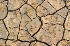 ραγισμένο ξηρό έδαφος Στοκ Φωτογραφία