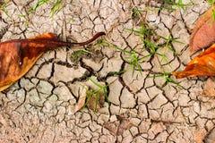 ραγισμένο ξηρό φυτό λάσπης στοκ φωτογραφία με δικαίωμα ελεύθερης χρήσης