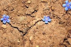 ραγισμένο ξηρό φυτό λάσπης Στοκ Φωτογραφία