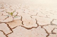 ραγισμένο ξηρό φυτό λάσπης Στοκ Εικόνες