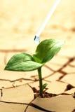 ραγισμένο ξηρό φυτό λάσπης Στοκ Φωτογραφίες