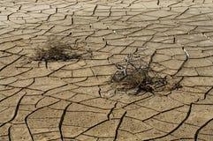 ραγισμένο ξηρό χώμα φυτών Στοκ εικόνα με δικαίωμα ελεύθερης χρήσης