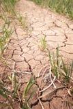 ραγισμένο χώμα ξηρασίας Στοκ Εικόνες