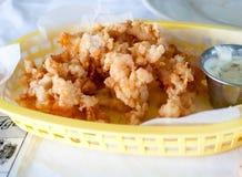 Ραγισμένο Conch Στοκ Φωτογραφίες