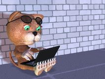 ραδιόφωνο γατακιών Στοκ Εικόνες