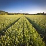 Δραματικός ουρανός, ειδυλλιακό αγροτικό τοπίο, Cotswolds UK Στοκ Εικόνες