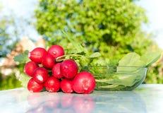 Ραδίκια και πράσινα για τη σαλάτα Στοκ Εικόνα