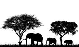Ρεαλιστική απεικόνιση του τοπίου με τα δέντρα στο αφρικανικό σαφάρι Μια οικογένεια τριών ελεφάντων με ένα μωρό πηγαίνει στη χλόη, διανυσματική απεικόνιση