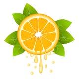 Ρεαλιστική πορτοκαλιά φέτα με τα φύλλα και τις πτώσεις του χυμού καρπός juicy Φρέσκα εσπεριδοειδή στην άσπρη διανυσματική απεικόν απεικόνιση αποθεμάτων