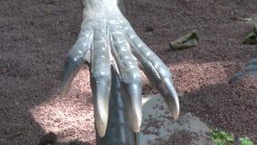 Ρεαλιστικός δεινόσαυρος coelophysis στο πάρκο ένα του Dino χέρι με τα νύχια απόθεμα βίντεο