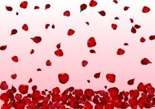Ρεαλιστικός κόκκινος αυξήθηκε πέταλα που διασκορπίστηκαν κάτω στο ρόδινο υπόβαθρο Στοκ Εικόνες
