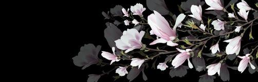 Ρεαλιστικό λουλούδι Magnolia που απομονώνεται στο μαύρο υπόβαθρο Ο κλάδος Magnolia είναι ένα σύμβολο της άνοιξης, καλοκαίρι, θηλυ διανυσματική απεικόνιση