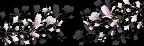Ρεαλιστικό λουλούδι Magnolia που απομονώνεται στο μαύρο υπόβαθρο Ο κλάδος Magnolia είναι ένα σύμβολο της άνοιξης, καλοκαίρι, θηλυ ελεύθερη απεικόνιση δικαιώματος