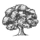 Ρεαλιστικό σκίτσο απεικόνισης δέντρων συρμένο χέρι διανυσματικό Στοκ Εικόνες