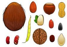 Ρεαλιστικοί καρύδια, σπόροι και φασόλια στο ύφος κινούμενων σχεδίων ελεύθερη απεικόνιση δικαιώματος