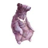 Ρεαλιστικός σταχτύς Watercolor αντέχει το δασικό ζώο διανυσματική απεικόνιση
