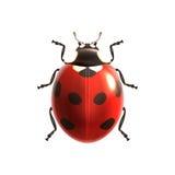 Ρεαλιστικός Ladybug που απομονώνεται διανυσματική απεικόνιση