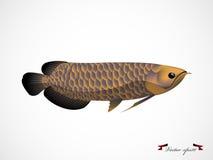 Ρεαλιστικό γραφικό διάνυσμα σχεδίου των ψαριών arowana Στοκ εικόνες με δικαίωμα ελεύθερης χρήσης