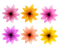 Ρεαλιστικό τρισδιάστατο σύνολο ζωηρόχρωμων λουλουδιών της Daisy για την εποχή άνοιξης Στοκ Φωτογραφίες