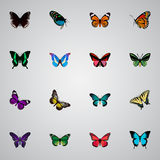Ρεαλιστικό Birdwing, τροπικός σκώρος, πεταλούδα και άλλα διανυσματικά στοιχεία Το σύνολο ρεαλιστικών συμβόλων πεταλούδων περιλαμβ απεικόνιση αποθεμάτων
