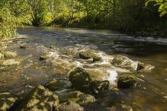 Ρεύματα ποταμού του μικρού ποταμού Στοκ Εικόνες