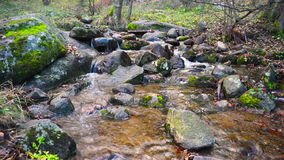 Ρεύμα βουνών βαθιά στο δάσος το φθινόπωρο φιλμ μικρού μήκους