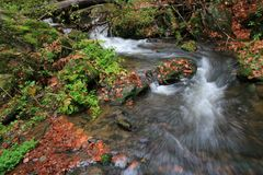 Ρεύμα βουνών με τους μεγάλους λίθους κάτω από τα φρέσκα πράσινα δέντρα Η στάθμη ύδατος κάνει τις πράσινες αντανακλάσεις σαν καλοκ Στοκ Εικόνα