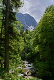 Ρεύμα βουνών σε ένα πράσινο δάσος με το όμορφο κύλισμα στοκ εικόνα με δικαίωμα ελεύθερης χρήσης