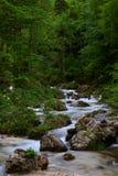 Ρεύμα βουνών σε ένα πράσινο δάσος με το όμορφο κύλισμα στοκ εικόνες