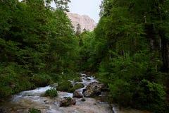 Ρεύμα βουνών σε ένα πράσινο δάσος με το όμορφο κύλισμα στοκ εικόνα