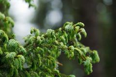 Ρεύμα βουνών στο δάσος Στοκ φωτογραφία με δικαίωμα ελεύθερης χρήσης