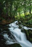 Ρεύμα βουνών στο δασικό Μαυροβούνιο Στοκ εικόνες με δικαίωμα ελεύθερης χρήσης