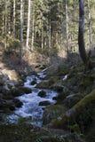 Ρεύμα βουνών στο αλπικό δάσος Στοκ Εικόνες
