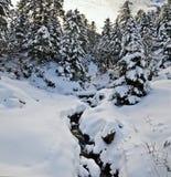Ρεύμα βουνών στο χειμερινό δάσος που καλύπτεται με το χιόνι Στοκ εικόνες με δικαίωμα ελεύθερης χρήσης