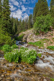 ρεύμα βουνών του Κολοράντο Στοκ εικόνα με δικαίωμα ελεύθερης χρήσης