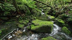 Ρεύμα γλυκού νερού στο τροπικό τροπικό δάσος φιλμ μικρού μήκους
