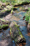 Ρεύμα και δέντρα με το βρύο Στοκ εικόνα με δικαίωμα ελεύθερης χρήσης
