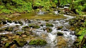 Ρεύμα, κολπίσκος στα βουνά, άνοιξη, πράσινο βρύο στις πέτρες, νερό που ρέει πέρα από τους λίθους απόθεμα βίντεο