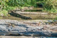 Ρεύμα παραλιών Seahurst στοκ εικόνες