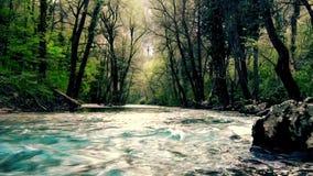 Ρεύμα ποταμών μέσω του δάσους σε ένα βουνό φιλμ μικρού μήκους