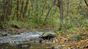 Ρεύμα ποταμών που τρέχει πέρα από τους βράχους πτώση Οκτώβριος απόθεμα βίντεο