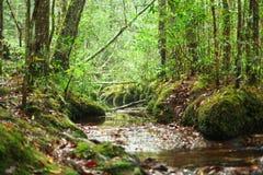 Ρεύμα ποταμών στα ξύλα στοκ εικόνα