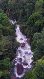 Ρεύμα ποταμών στη ζούγκλα Στοκ Φωτογραφίες