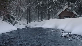 Ρεύμα ποταμών στο χειμερινό δάσος απόθεμα βίντεο
