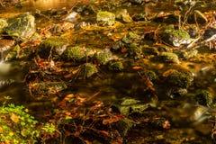 Ρεύμα που πέφτει απότομα ήπια κάτω από ένα δάσος βουνών με τους μικρούς καταρράκτες στο πρώτο πλάνο και τη φρέσκια πράσινη φτέρη  στοκ εικόνες