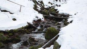 Ρεύμα σε ένα χειμερινό δάσος βουνών απόθεμα βίντεο